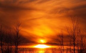 Wallpaper the sun, trees, sunset, yellow
