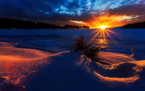 Picture forest, Winter, sky, trees, landscape, nature, sunset, beautiful, clouds, snow, sun