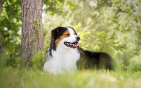 Picture grass, trees, nature, Park, dog, spring, lawn, Wallpaper from lolita777