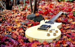 Picture guitar, forest, autumn, leaves