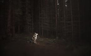 Wallpaper forest, each, dog