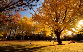 Picture autumn, leaves, Park, people, tree