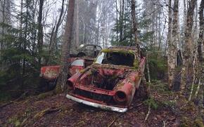Picture machine, fog, moss, scrap