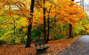 Picture autumn, grass, leaves, trees, bench, nature, Park, colors, hdr, grass, walk, road, trees, nature, park, …