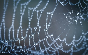 Picture drops, macro, web, gossamer