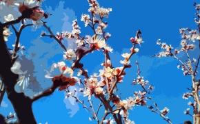Wallpaper flowers, spring, bloom