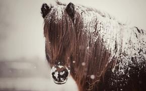 Picture snow, horse, horse, mane