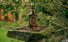 Picture bottle, bokeh, Scotland, the poet, pedestal, celebrate, Robert Burns