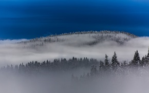 Picture forest, the sky, fog