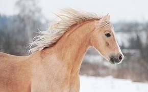 Picture horse, horse, profile