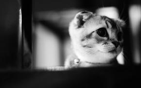 Picture animals, cat, kitty, kitten, cat, animal