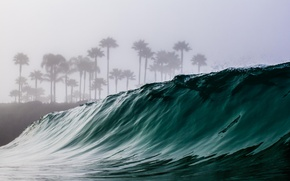 Picture sea, water, palm trees, the ocean, wave