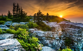 Picture trees, sunset, stones, USA, the bushes, West Virginia