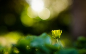 Picture flower, flowers, green, background, Wallpaper, blur, wallpaper, widescreen, flowers, background, bokeh, full screen, HD wallpapers, …