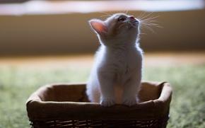 Picture kitty, basket, Hannah, © Benjamin Torode