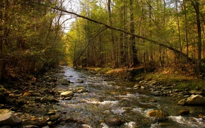 Picture forest, river, texture, spring