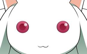 Picture anime, mahou shoujo madoka magica, Girl Madoka, kyubey