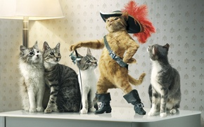 Picture cats, hat, sword, puss in boots