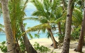 Picture sand, sea, beach, summer, palm trees, heat, stay
