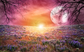 Picture field, the sky, trees, landscape, sunset, flowers, the moon, large