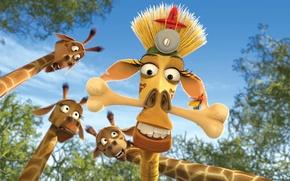 Picture the sky, cartoon, cartoon, Madagascar, giraffes, Madagascar, Escape 2 Africa, Melman