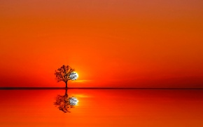 Picture water, the sun, sunset, tree