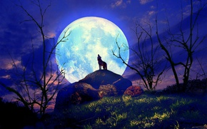 Picture grass, night, wolf, silhouette, hill, the full moon, the bushes, howling, lonely, 3d art