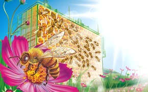 Picture flowers, bee, cell