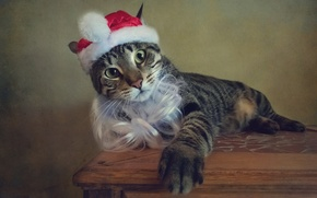 Picture cat, cat, style, retro, holiday, treatment, Christmas, New year, image, beard, Santa Claus, cap, Wallpaper …