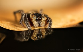 Picture macro, sheet, reflection, spider, insect