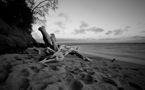 Wallpaper sea, beach, water, tree, white, shore, the evening, black, snag