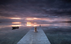 Picture sunset, bridge, lake, dog