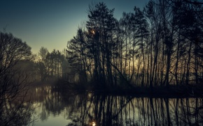 Picture trees, nature, fog, river, beautiful morning view