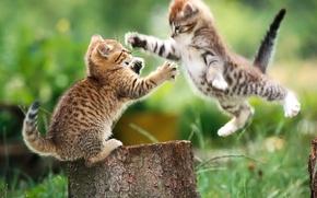 Picture Kittens, fight, stump