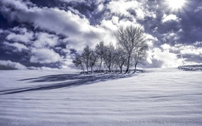 Picture winter, clouds, snow, trees