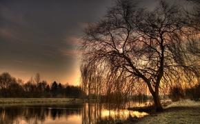 Wallpaper Tree, HDR, river