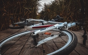 Picture sport, sport, bicycle, bike, led