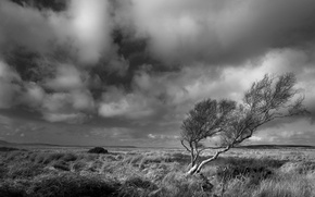 Picture the steppe, tree, the wind