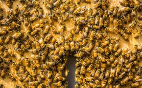 Wallpaper bees, background, beehive