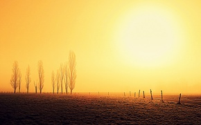 Picture field, trees, sunrise, the fence, horizon, solar