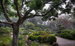 Picture city, park, tree