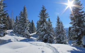 Picture winter, forest, the sky, the sun, rays, snow, trees, traces