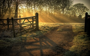 Picture rays, light, nature, morning
