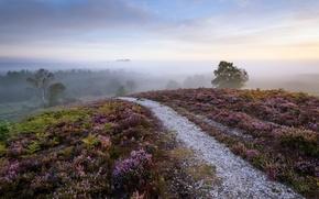Wallpaper road, fog, morning