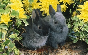 Picture flowers, pair, rabbits, log