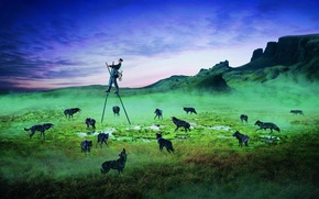 Picture field, animals, fear, people, the evening, wolves, The postman, stilts