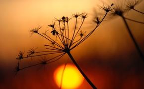 Picture the sun, plant, branch