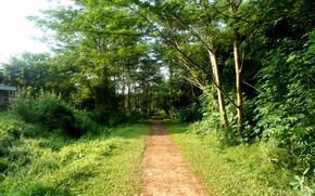 Picture forest, summer, trees, nature, house, trail