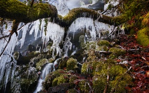 Picture ice, winter, tree, waterfall