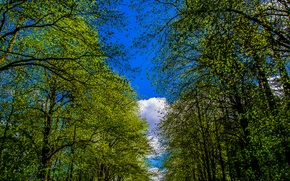 Picture forest, the sky, clouds, trees, Park, alley